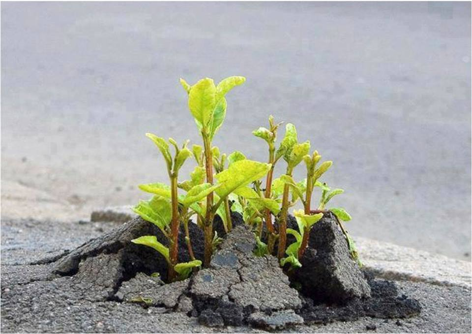 plant-growing-in-pavement